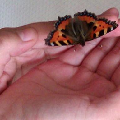 A butterfly in Robin's hands