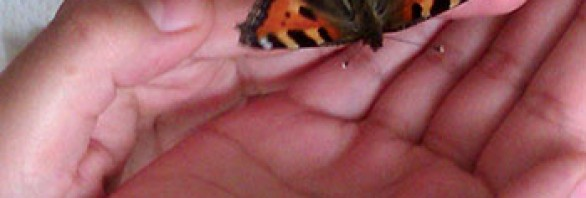 A butterfly in Robin's hands